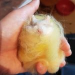 a tiny hamster